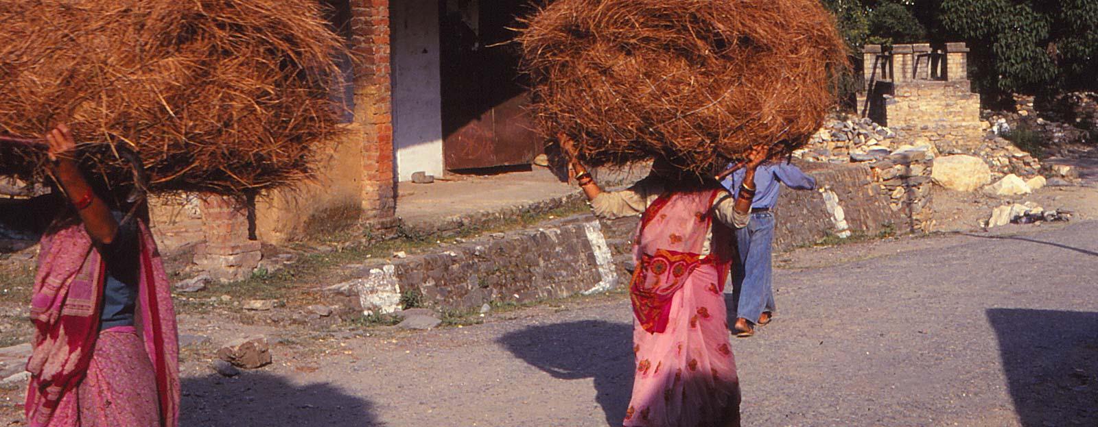 women-carrying-forest-clutter