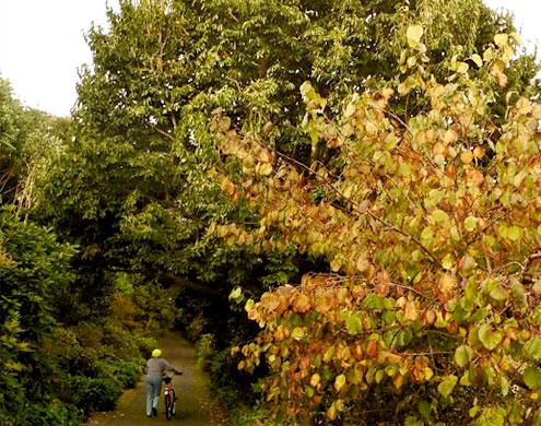 Oak planted at Hamilton Gardens