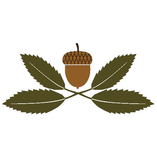 Himalayan Oak