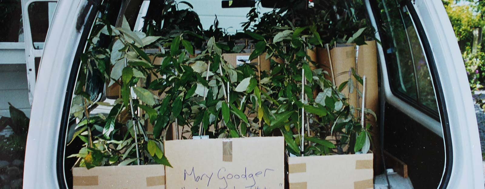 Make a donation buy a Himalayan Oak