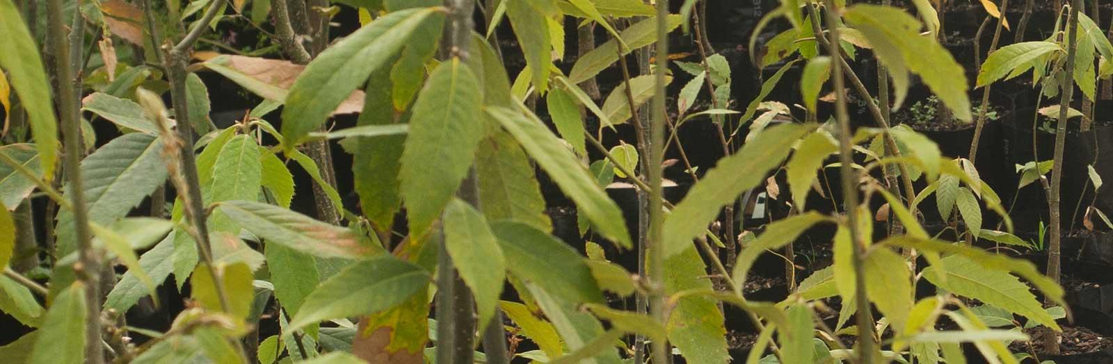 Seedlings ready to buy
